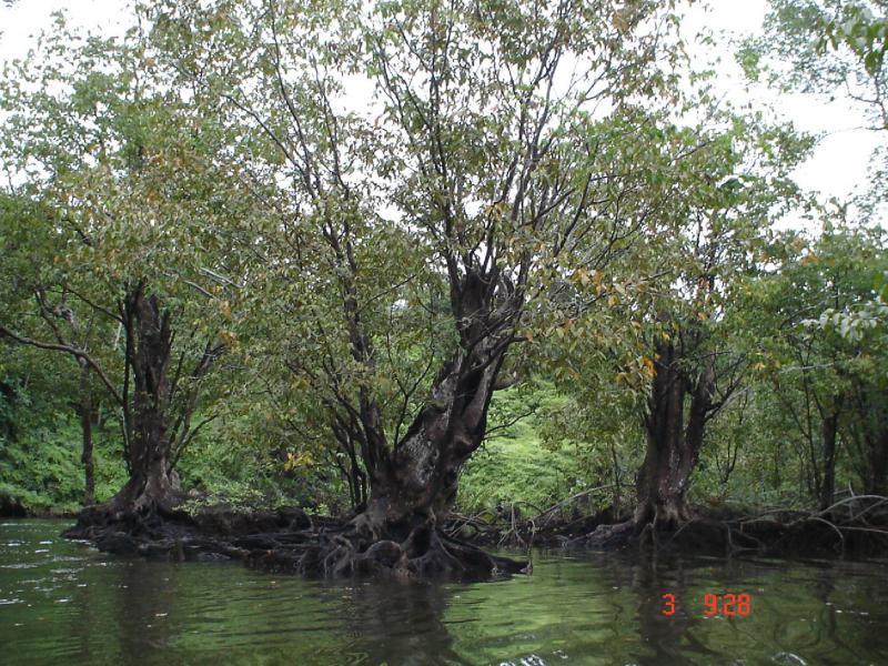 Reserva Ecológica Manglares Cayapas Mataje
