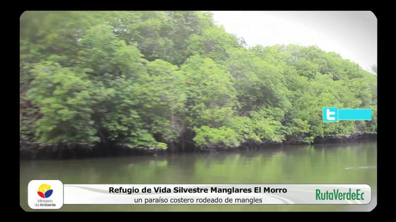 Refugio de Vida Silvestre Manglares El Morro