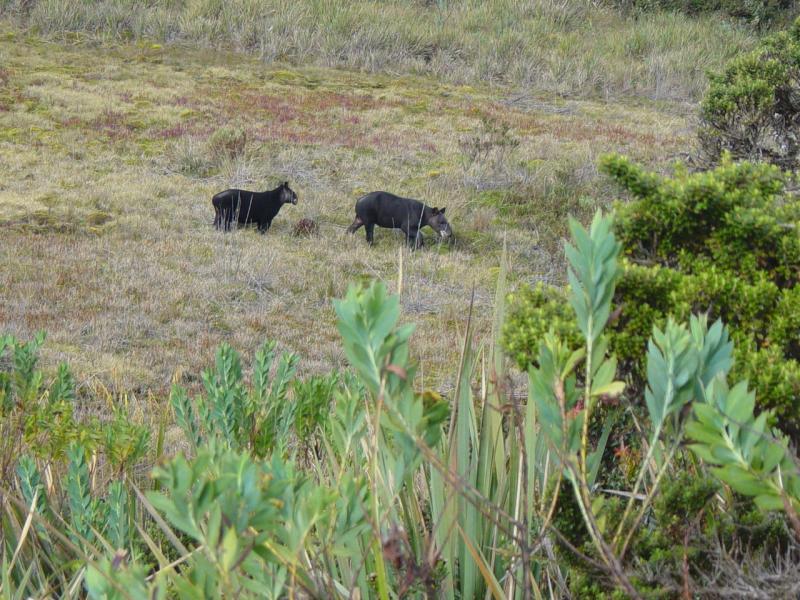 Parque Nacional Llanganates - El Valle de los Frailejones